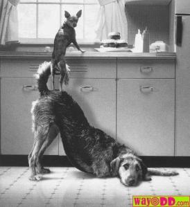 dogs helping dogs
