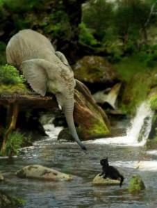Elephant-helping-kitten-620x823