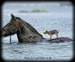 horse-carrying-dog-FREEKIBBLE-FB