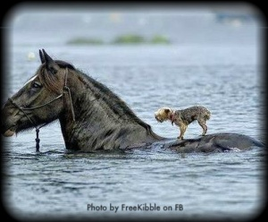horse-carrying-dog-FREEKIBBLE-FB