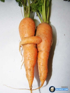 Carrot-hugs-funny-food-images-amazing-food-shapes-pics-photos-world-pictures-gallery-bajiroo-25