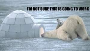 Polar Bear Igloo copy