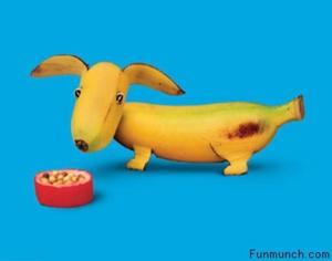 Vh-funny-food-banana-dog