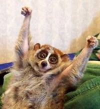 animal with hands up